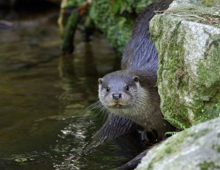 Vidro pogosto srečamo v Krajinskem parku Lahinja.