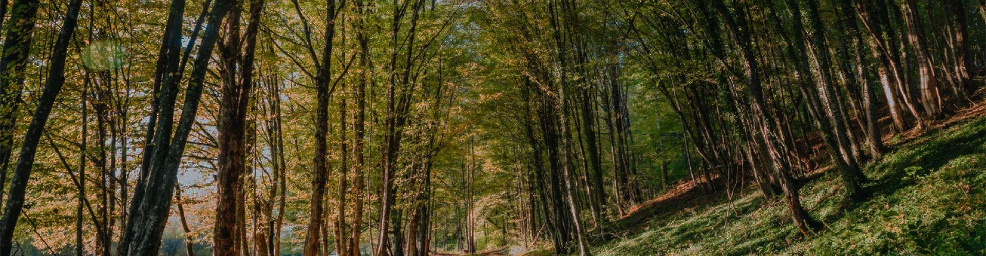 Jesen v Krajinskem parku Lahinja