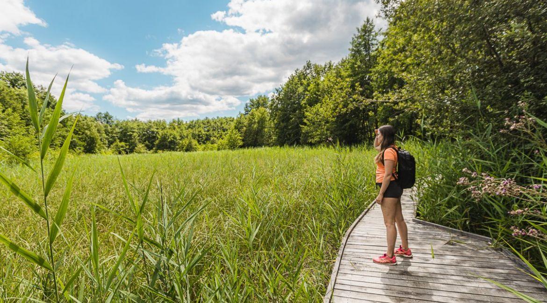 Lesen podest vodi do ptičje opazovalnice